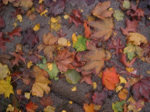 ifall4leaves-pic7