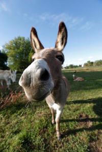 donkey happy
