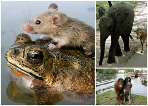 odd couples animals
