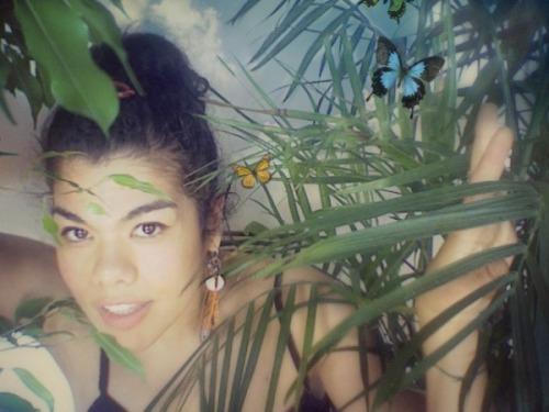 butterflies nature