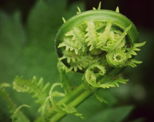 new seed unfurling