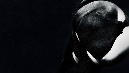 blackfish_movie