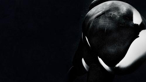 blackfish_movie