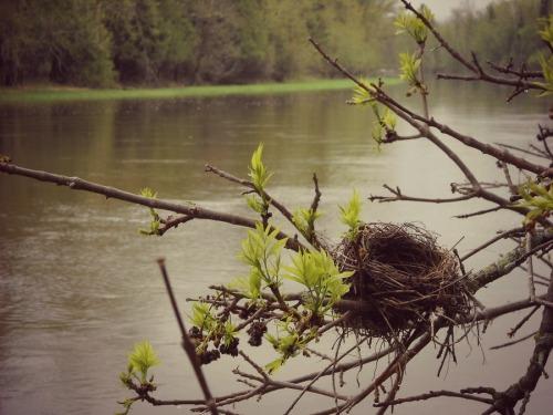 refining and rewilding