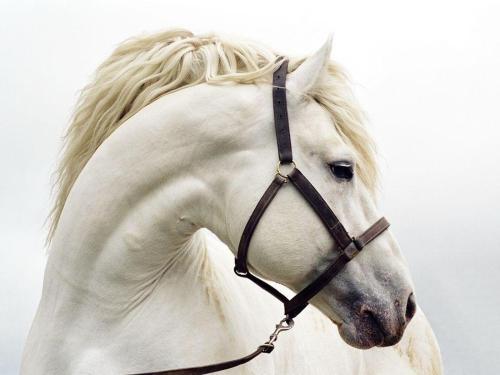 white-horse-grace