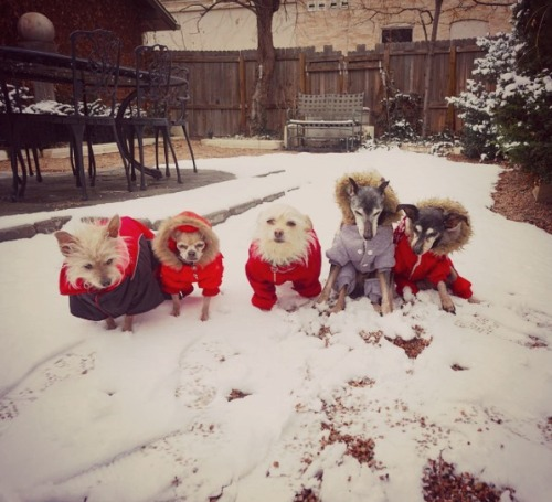 small dogs in winter coats