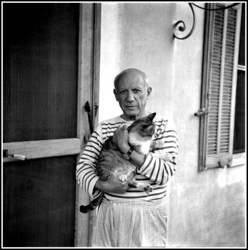 pablo picasso portrait cat