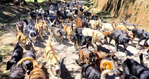 1_Costa-Rica's-Land-of-the-Stray-Dogs