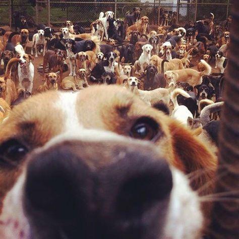 Lya Battle's Dog Paradise