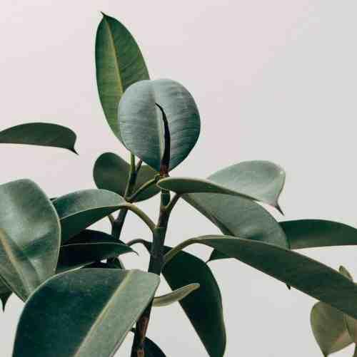 minimalist-house-plants
