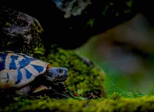 turtle medicine